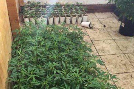 Asegura PGR 2 mil plantas de marihuana en invernadero de Oaxaca