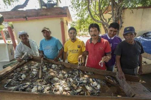 Crece cooperativa de jaiberos de Oaxaca; ya exporta a EU