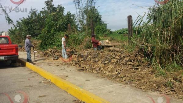 Protección Civíl derriba 40 árboles en calzada Víctor Bravo Ahuja