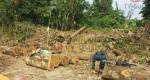 Tenía conocimiento de que solo seis árboles serían derribados: Contralora Municipal