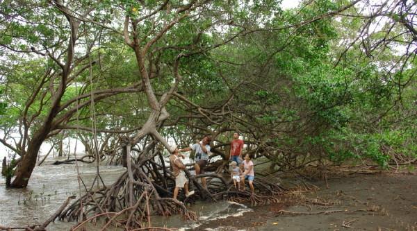 Convertirán manglares de Playa Abierta, en parques ecoturísticos