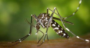 Para este 2020 esperan, mayor número de casos en dengue: JS