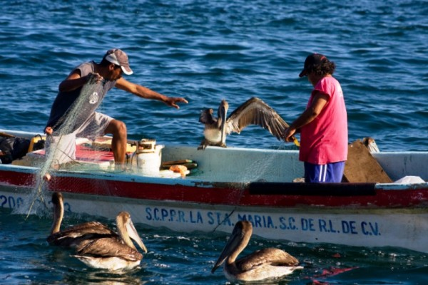 Decretan veda de mariscos en litoral oaxaqueño