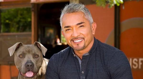 El encantador de perros, es acusado por crueldad animal