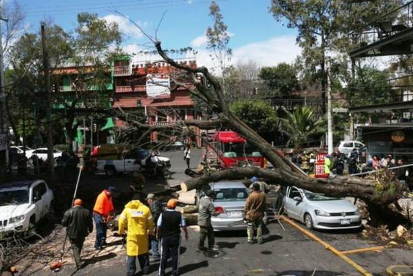 Caen 510 árboles en la Ciudad de México