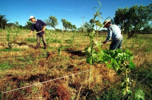 Para transparentar entrega de recursos, SADER busca bancarizar pago a productores