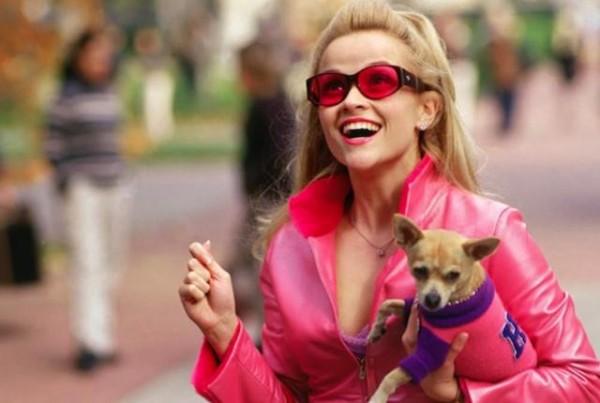 Murió el perrito chihuahua de la película Legalmente rubia