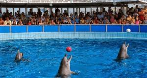 24 mil personas piden cancelar construcción de delfinario en Huatulco