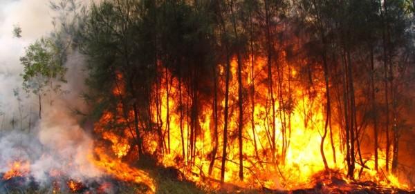 Nueve incendios forestales devastan Chimalapas