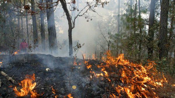 Más de 30 mil h arrasadas en 186 incendios forestales