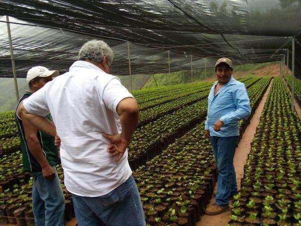 A través de viveros, buscan beneficiar a productores de café