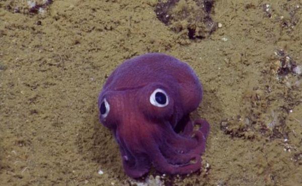 Encuentran molusco que parece de caricatura