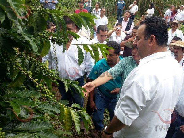 Con alta tecnología y aumento de producción, busca café Ñeey expandirse en el mercado nacional