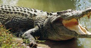 Localizan cuerpo de menor que fue arrastrado por cocodrilo en Oaxaca