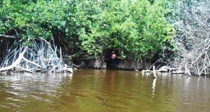 Reinicia Protección Civil búsqueda de menor arrastrado por lagarto