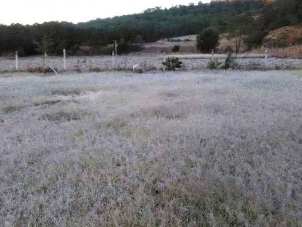Hielo cubre cultivos en la región Mixteca de Oaxaca