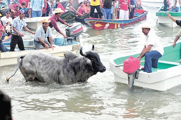 Prohíben embalse de toros en Tlacotalpan