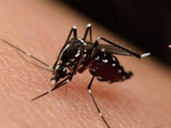 Mexicanos experimentarán vacuna contra el zika en Reino Unido