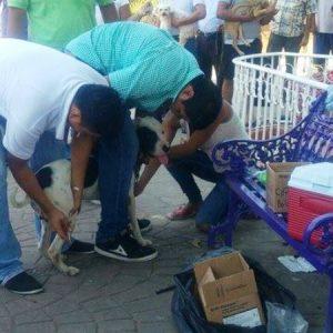 Continúa jornada de vacunación antirrábica en Tuxtepec