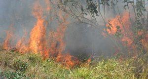 Incontrolables incendios de pastizales en la costa oaxaqueña