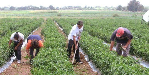 En Oaxaca, 3% de los ejidatarios son jóvenes y sin interés de producir: Vanguardia Juvenil