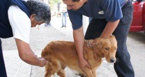Alta participación de dueños de mascotas en campaña de vacunación antirrábica