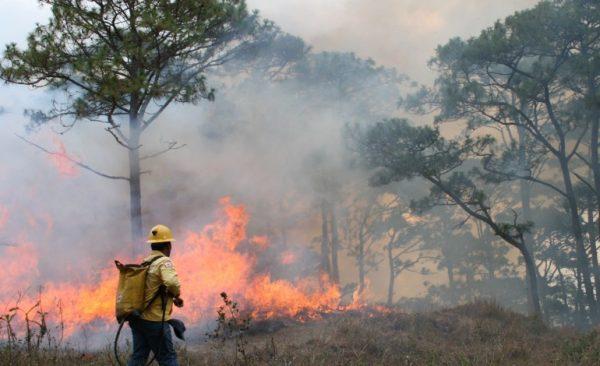 Afectan incendios más de 11 mil hectáreas de bosques de pino en Oaxaca