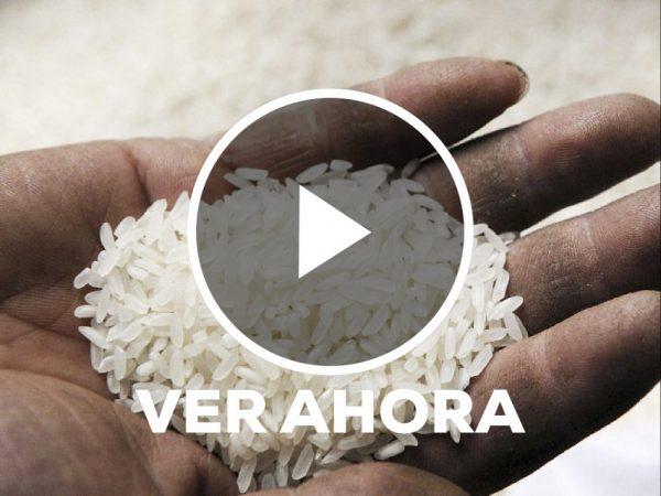 Exhiben en redes supuesto arroz de plástico, empresa responde.