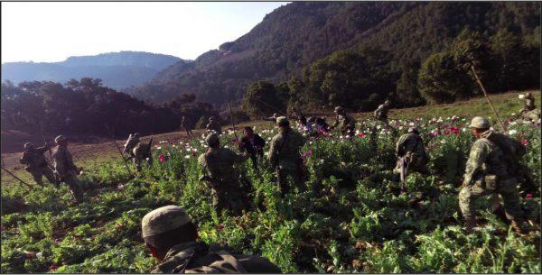 Agredieron a militares que destruían plantío de amapola en Oaxaca