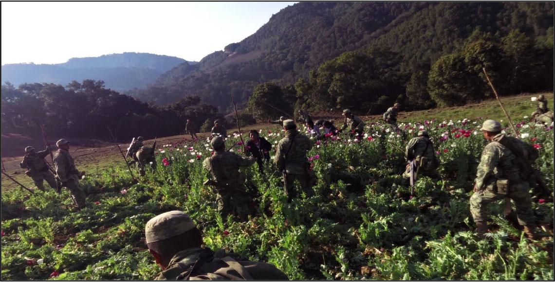 Indígenas golpean a militares por destruir amapolas en Oaxaca