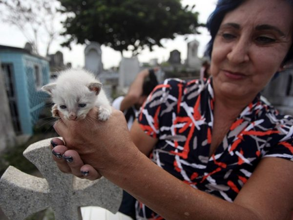 Satanizan a gatos en México… sólo para abandonarlos