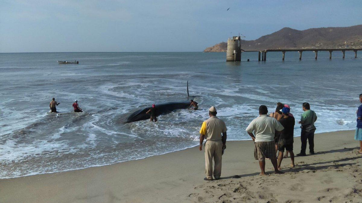 En playas de Oaxaca aqueda varada una ballena