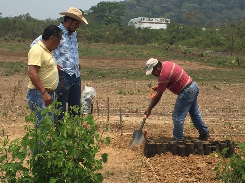 Gobierno municipal de tuxtepec establece vivero de plantas for Viveros en oaxaca