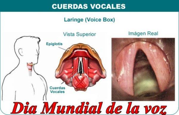 ¿Cómo anda tu voz?