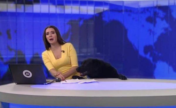 Perro interrumpe noticiero ruso