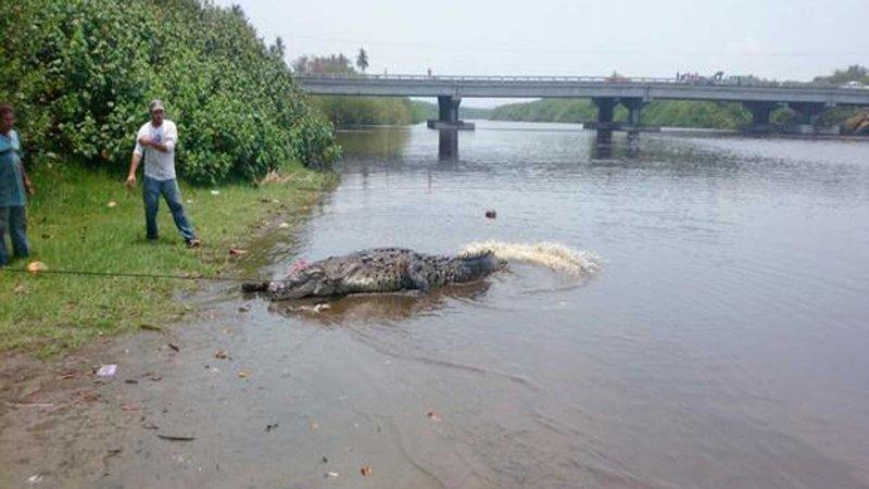 Ataca cocodrilo a persona en la costa de Oaxaca