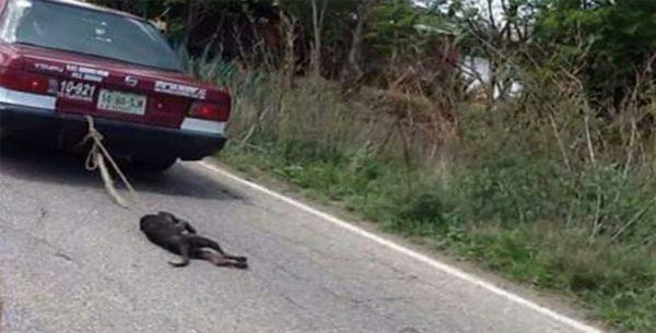 Demanda diputada Adriana Atristain revocación de concesión tras maltrato animal