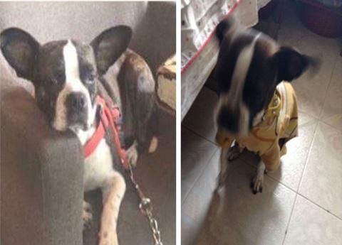 SECUESTRO DE MASCOTAS – Gala estuvo presa un mes: la odisea del secuestro de perros –
