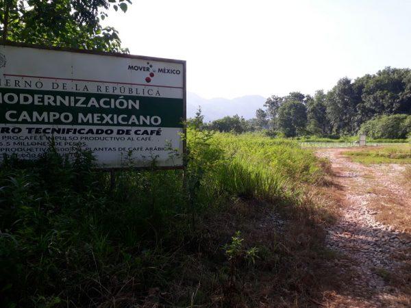 Desmantelamiento del vivero de café en Valle fue un acto ruin: Impulsor del proyecto