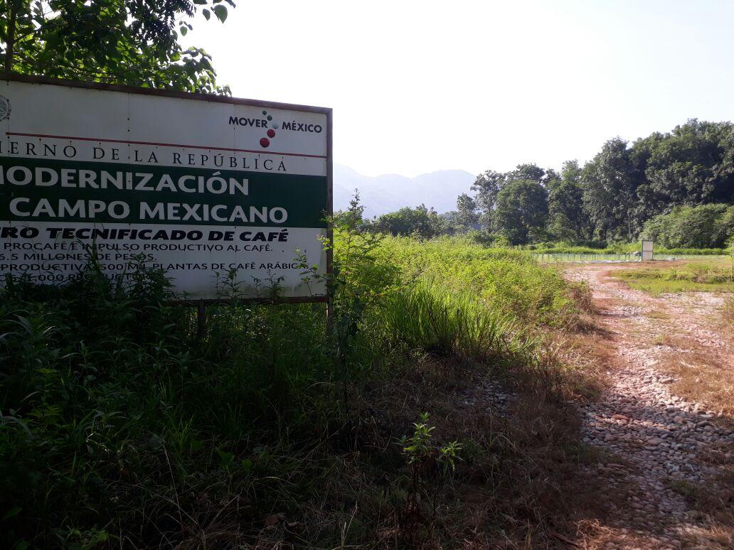 Desmantelan vivero tecnificado de caf en valle nacional for Viveros en oaxaca