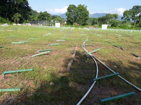 Desmantelan Vivero Tecnificado de café en Valle Nacional