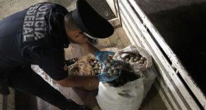 Incauta Policía Federal 2,500 huevos de tortuga en Oaxaca