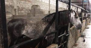 Catean propiedad de presunto líder de banda delictiva en la Mixteca; hallan caballos de Pedro Domecq