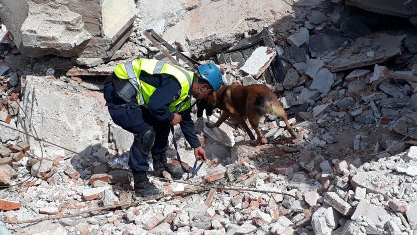 Unidad canina de la Marina rescata a 12 personas vivas de escombros
