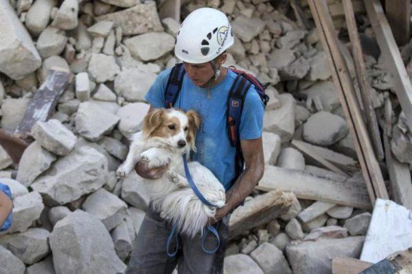 Perros rescatados tras el 19-S ya tienen nuevos hogares