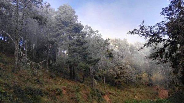 Onda gélida deja paisajes invernales en Oaxaca