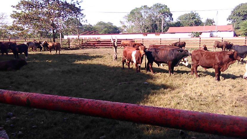 Entregan apoyos a ganaderos de la cuenca del papaloapan