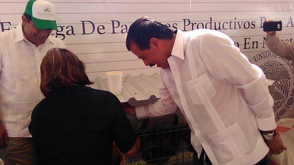 Entrega Eviel Pérez segundo paquete de gallinas ponedoras en Tuxtepec