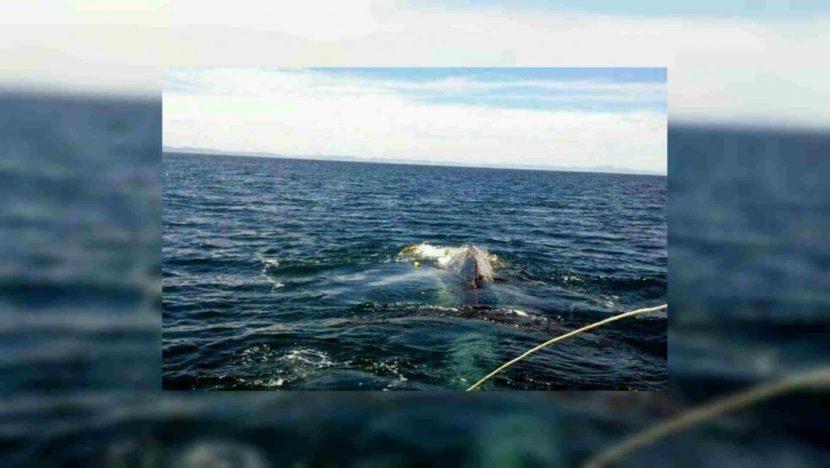 Ballena queda atrapada en playa de Pochutla