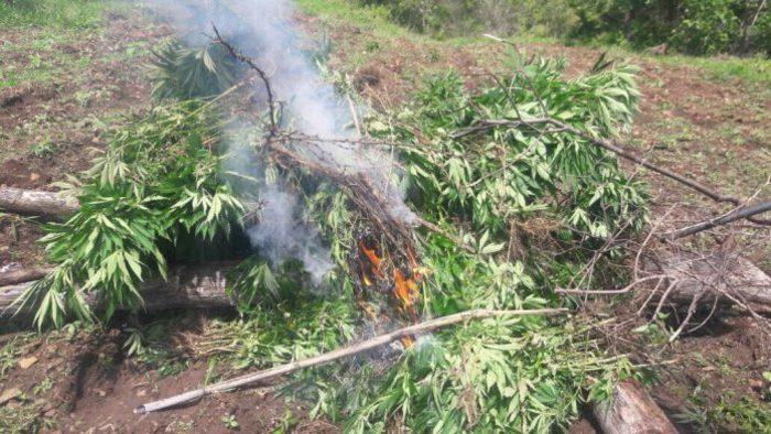 Ejército destruye plantíos de mariguana y amapola en Oaxaca